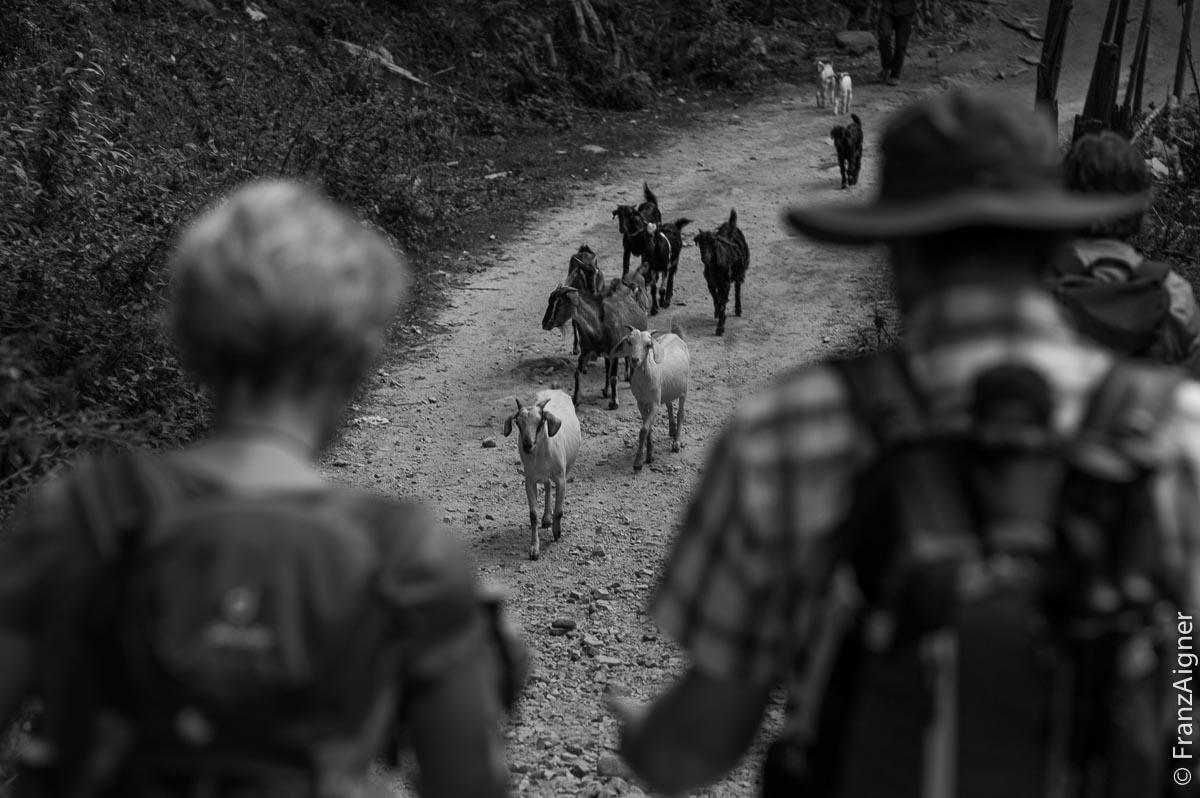 FA_Annapurna_29Oct2013_0048